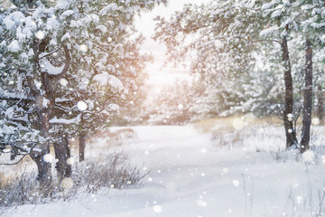 Winter snowy forest. Snowfall. Snow on the branches of trees. Winter background.