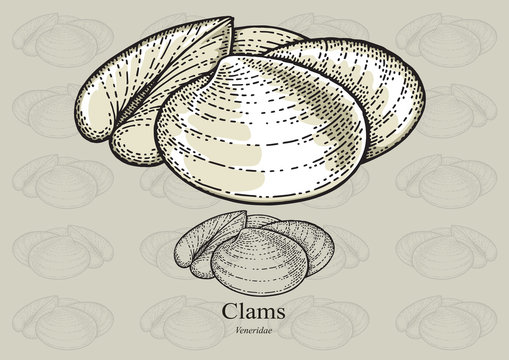 Clams. Vector illustration for artwork in small sizes. Suitable for graphic and packaging design, educational examples, web, etc.