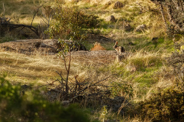 Wild rabbit in the nature habitat, spanish andalusia, Gyps fulvus, wild spain, iberian wildlife