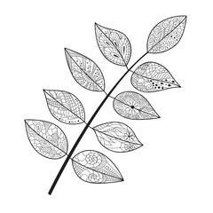 Leaf doodle