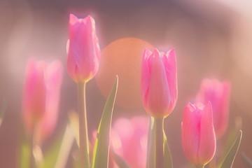 Fotobehang Tulp ほのぼのとした冬のチューリップ