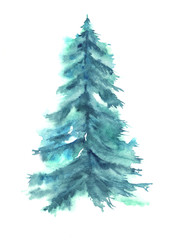 Tree, fir, pine, cedar watercolor isolated on a white background