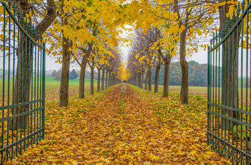 Autumn trees lined in private home road with open gate with foliage in Italy,Europe / trees/ gate/ road / empty/ autumn