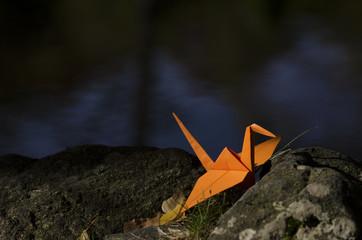 Orange crane ona rock and water reflections