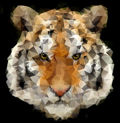 Tiger polygon