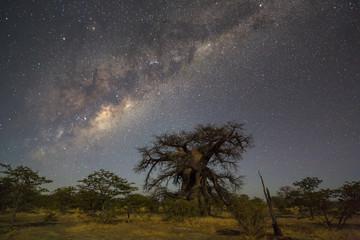 Large baobab tree under the milkyway
