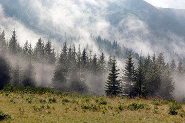 foggy meadow in mountains