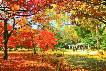 View of the park in autumn in Tokyo, Japan.