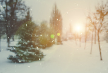 Winter, blur spruce trees, bokeh, falling snow