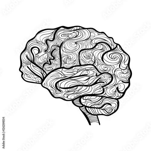 Schwarz und weiß Vektor: Skizze des menschlichen Gehirns. Ideal für ...