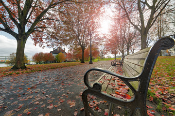 Park Benches in the Park in Autumn