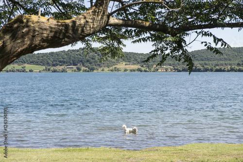 Cane che fa il bagno al lago stock photo and royalty free images on pic 126304893 - Fare il bagno al cane dopo mangiato ...