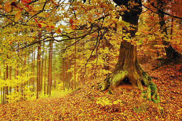 Detail of yellow autumnal forest in Macha region in the Czech Republic