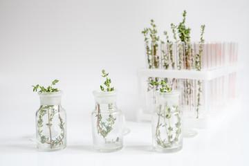 fresh thyme in bottles on white background