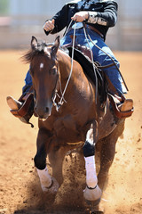 The front view of a rider in cowboy chaps, boots and hat on a horseback running ahead and stopping the horse in the dust.