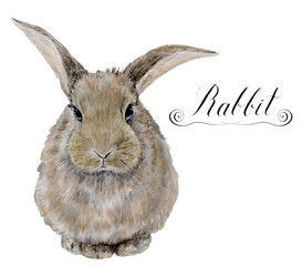 Watercolor rabbit. Cute realistic illustration for kids design, easter design or prints