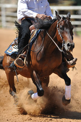 The front view of a rider on a horseback stopping  in the dust.