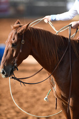 A close up view of a horse and lasso