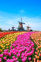 Obraz Landscape with tulips in Zaanse Schans, Netherlands, Europe - fototapety do salonu