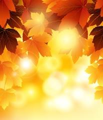 orange autumn flowers background