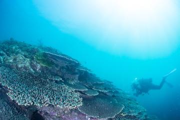 Beautiful Coral reaf