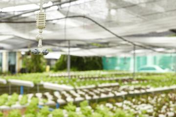 watering system in Vegetables hydroponics garden