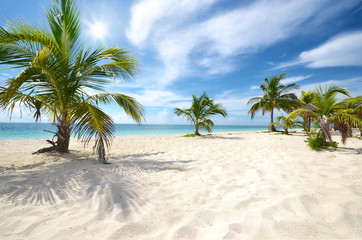Palmen auf den Bahamas