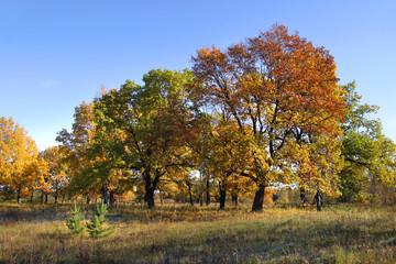 autumn day in the oak grove