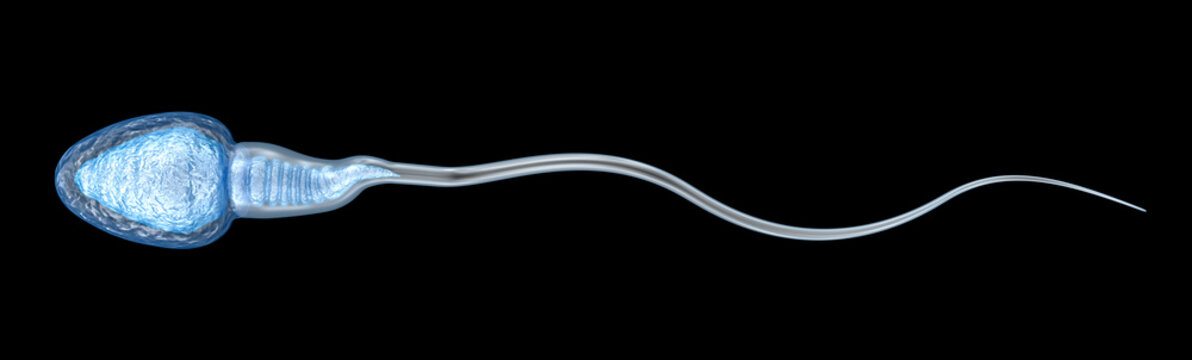 Sperm illustration, Medically accurate 3D illustration