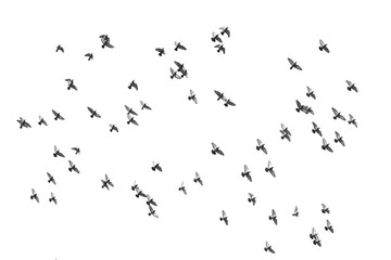 The birds are flying.