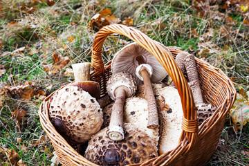 Pilze im Korb