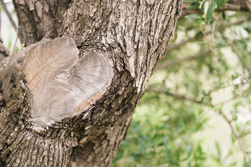 The cut on the tree trunk in the shape of heart