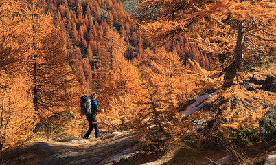 Fotomurales - Female hiker walking in the warm autumn colors of the Claree valley, France.