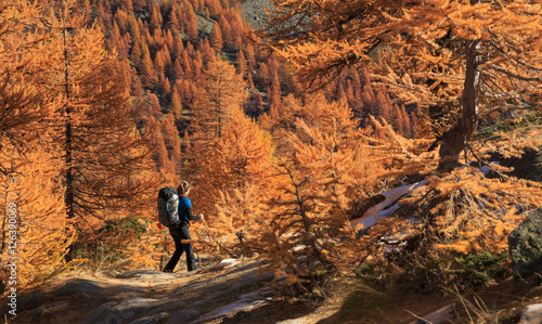 Fotomurales Female hiker walking in the warm autumn colors of the Claree valley, France.