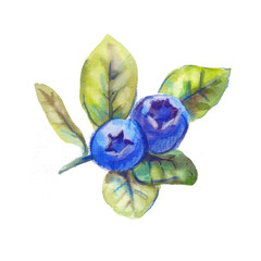 blueberries with leaves, drawing by hand