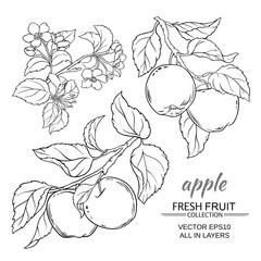 apple vector set