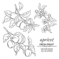 apricot vector set