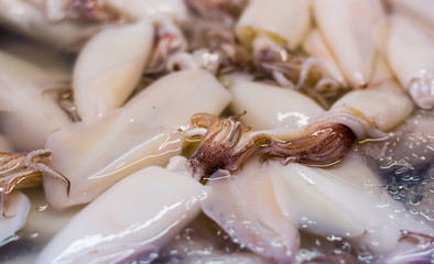 fresh squids in the market, nutritions, seafood .