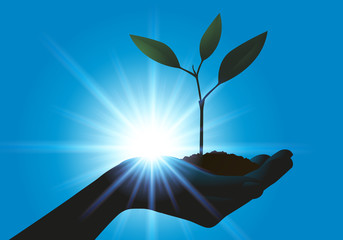 Plante - Main - développement durable -environnement