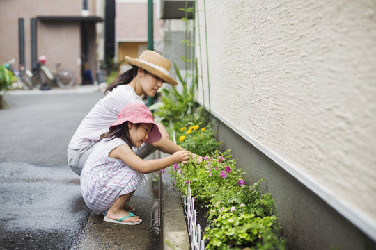 Family home. A woman and her daughter tending plants in a narrow strip of soil.