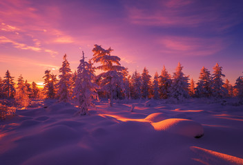 Poster Aubergine Winter landscape with forest, sun and snow.