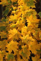 a walk on a Sunny autumn day