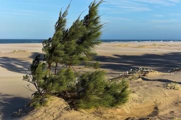 Sandstrand an der Elephant Coast in St. Lucia - Südafrika