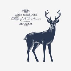 Белохвостый Олень, символ штата Арканзас