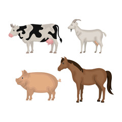 animals farm domestic icon vector illustration design