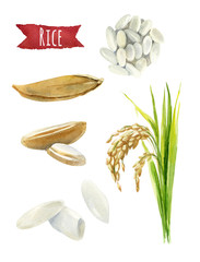 Rice  watercolor illustration set with clipping paths