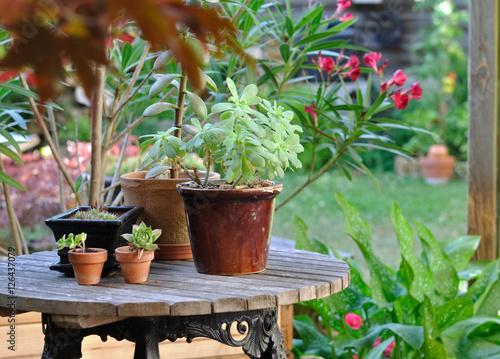 plantes en pot sur une table de jardin \