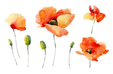Set of watercolor poppy flowers on a white background.