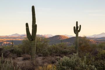 Photo sur Aluminium Cactus Arizona Desert Landscapes