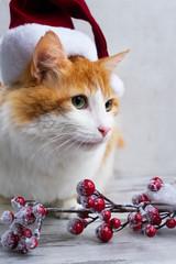 Little santa helper - cute red cat in christmas santa hat